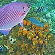 Reef Life Print by John Malone