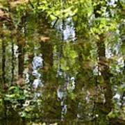 Reflection Of Woods Print by Sonali Gangane