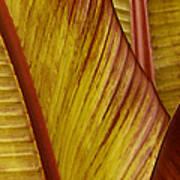Repose - Leaf Print by Ben and Raisa Gertsberg