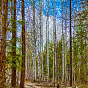 River Run Trail At Arrowleaf Print by Omaste Witkowski