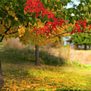 Riverbend Orchard Print by Theresa Tahara