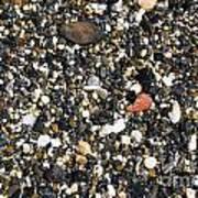 Rocks On The Beach Print by Steven Ralser
