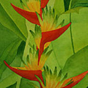 Rojo Sobre Verde Print by Diane Cutter