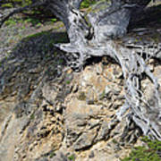 Rooted On The Edge Print by Bruce Gourley