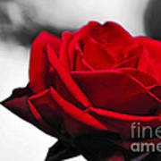 Rosey Red Print by Kaye Menner