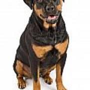 Rottweiler Dog With Drool Print by Susan Schmitz
