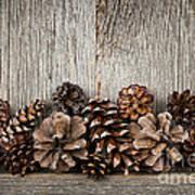 Rustic Wood With Pine Cones Print by Elena Elisseeva