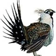 Sage Grouse  Print by Anonymous