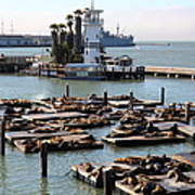 San Francisco Pier 39 Sea Lions 5d26102 Print by Wingsdomain Art and Photography