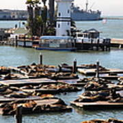 San Francisco Pier 39 Sea Lions 5d26103 Print by Wingsdomain Art and Photography