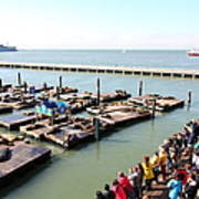 San Francisco Pier 39 Sea Lions 5d26109 Print by Wingsdomain Art and Photography