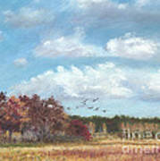 Sandhill Cranes At Crex With Birch  Print by Jymme Golden