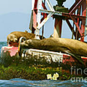 Sea Lions Floating On A Buoy In The Pacific Ocean In Dana Point Harbor Print by Artist and Photographer Laura Wrede