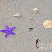 Sea Swag - Purple Print by Al Powell Photography USA