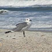 Seagulls At Fernandina 2 Print by Cathy Lindsey