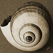 Seashells Spectacular No 25 Print by Ben and Raisa Gertsberg