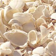 She Sells Seashells Print by Kim Hojnacki