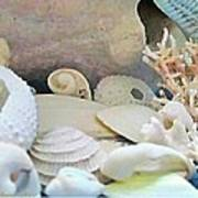 Shells In Pastels Print by Danielle  Parent