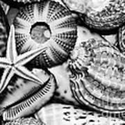 Shellscape In Monochrome Print by Kaye Menner