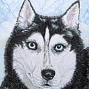 Siberian Husky Print by Yvonne Johnstone