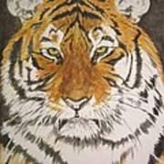 Siberian Tiger Print by Regan J Smith