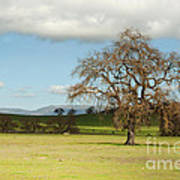 Silicon Valley Hills Print by Artist and Photographer Laura Wrede