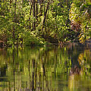 Silver Springs Nature Park Florida Print by Christine Till