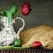 Sleepy Tulips Print by Diana Angstadt