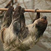Sloth Print by Ellen Henneke