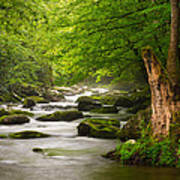 Smoky Mountains Solitude - Great Smoky Mountains National Park Print by Dave Allen