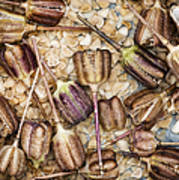 Snakes Head Fritillary Flower Seeds Pattern Print by Tim Gainey