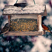 Snow Birds Print by Bonnie Bruno
