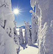 Snowscape Snow Covered Trees And Bright Sun Print by Anonymous
