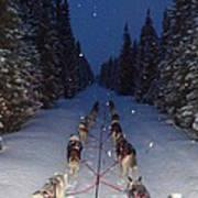 Snowy Night In The Pines Print by Karen  Ramstead