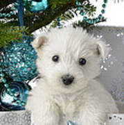 Snowy White Puppy Present Print by Greg Cuddiford
