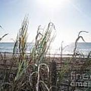 Soft Breezes  Print by Angelia Hodges Clay