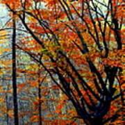 Song Of Autumn Print by Karen Wiles