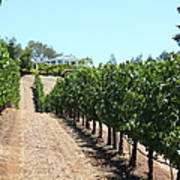 Sonoma Vineyards In The Sonoma California Wine Country 5d24507 Print by Wingsdomain Art and Photography