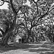 Southern Lane Monochrome Print by Steve Harrington