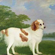 Spaniel In A Landscape Print by John Nott Sartorius