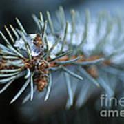 Sparkling Pine Print by Darren Fisher
