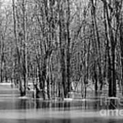 Spring Flooding Print by Sophie Vigneault