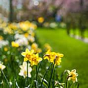 Spring In Holland. Garden Keukenhof Print by Jenny Rainbow