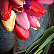 Spring Tulips Print by Edward Fielding