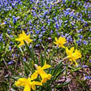 Spring Wildflowers Print by Elena Elisseeva