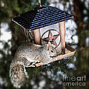 Squirrel On Bird Feeder Print by Elena Elisseeva