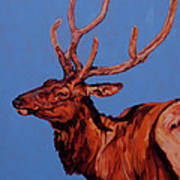 Stag Print by Patricia A Griffin