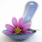 Still Life With Pink Flower On A Blue Spoon Print by Frank Tschakert
