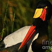 Stork Colors Print by Adrian Tavano