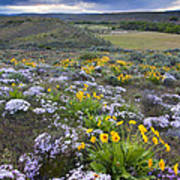 Storm Over Wildflowers Print by Mike  Dawson